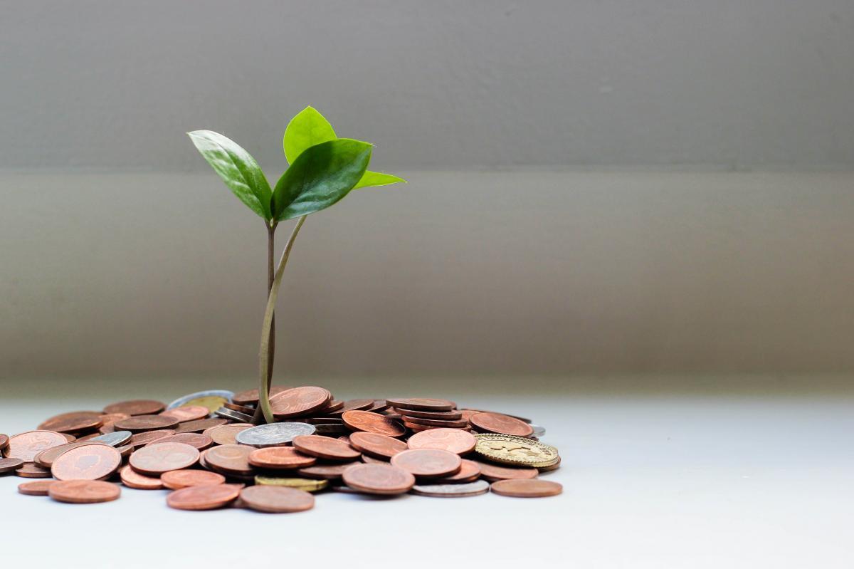 roślinka wyrastająca z gruntu w postaci monet