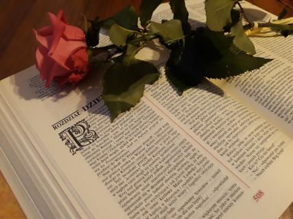 Książka i róża